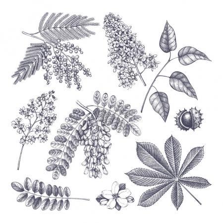 Illustration pour Collection vectorielle d'arbres en fleurs dessinés à la main illustration. Plan du jardin botanique. Conception de boutique de fleurs - image libre de droit