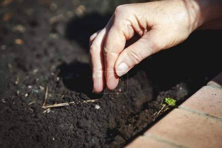 Hand sowing seeds in ground close-up