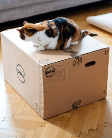 Photo pour Paris, France - 6 août: Cat inspecter la nouvelle boîte de carton de workstation Dell Computer livrés par courrier et à gauche de la porte - image libre de droit