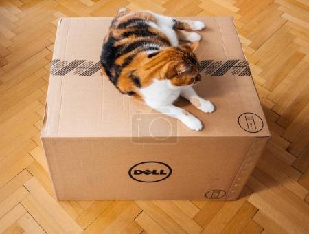 Photo pour Paris, France - Aug6: Chat inspectant plusieurs boîtes d'Amazon Prime livrés par courrier et à gauche de la porte par messagerie livraison Hermes - image libre de droit