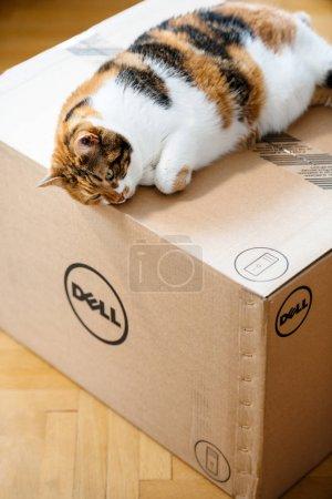 Photo pour Paris, France - Aug6: Chat dort sur le nouvel ordinateur Dell workstation carton livrées par courrier et à gauche de la porte - image libre de droit