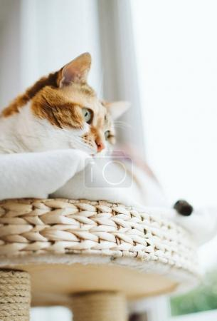 woman looking through window from the cat tree