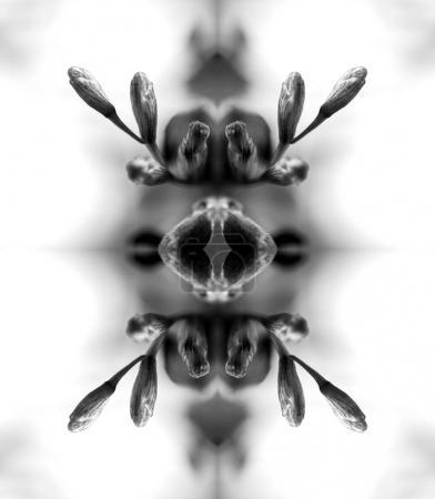 Macro close-up photograph of a freesia dried dead freesia flower