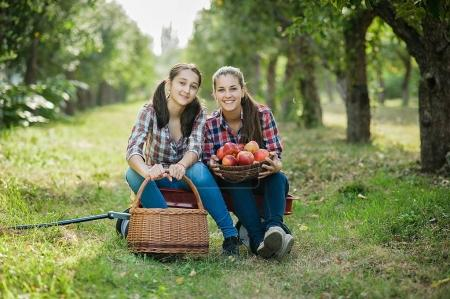 Girls with red apples in Orchard garden. Harvest Concept. Teenagers eating fruits at fall harvest.