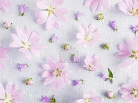Floral composition with lilac hollyhocks on light background