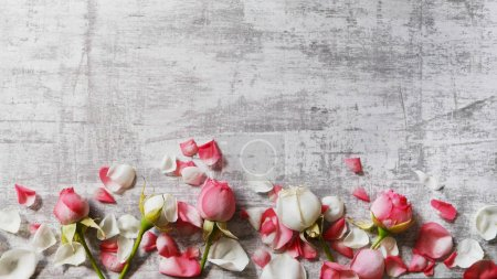 Pink and white roses with petals on grey surface