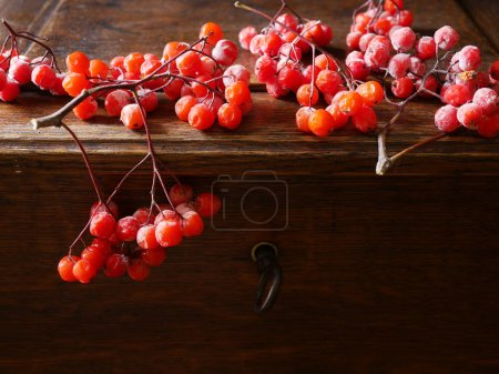 Photo for Still life composition of viburnum branches on dark background - Royalty Free Image