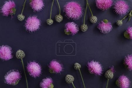 Floral composition with burdock flowers on dark background