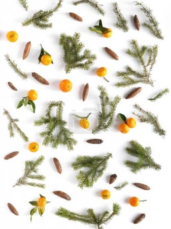 Composition of fir branches, cones and mandarins with leaves