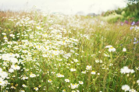 Photo for Flowers on summer field at sunny day - Royalty Free Image