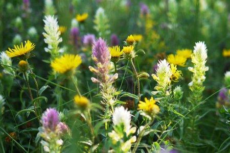 fleurs sur le champ d'été à la journée ensoleillée