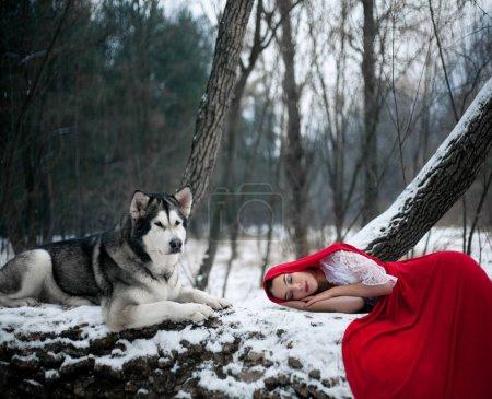 Photo pour Fille en costume Petit chaperon rouge avec chien malamute comme un loup. Elle dort dans la forêt sur un arbre près du chien . - image libre de droit