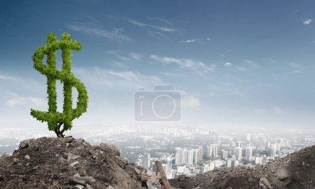 green tree in shape of dollar