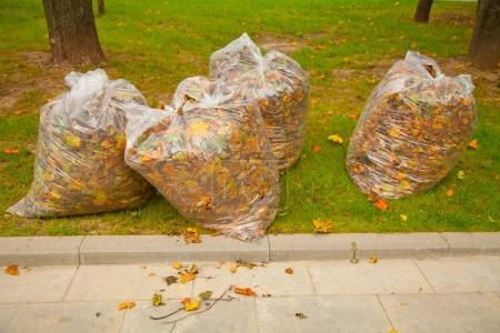 Photo pour Nettoyage d'automne dans le parc - image libre de droit