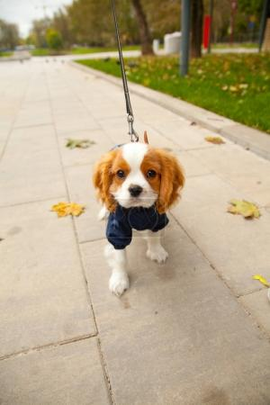 pretty cute little white brown puppy in the autumn park