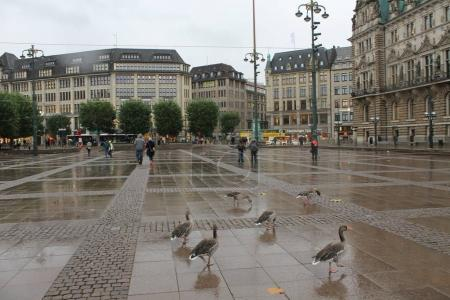wild birds on square
