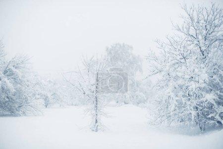 Foto de Nevada del invierno en el pueblo. Nieve caída. - Imagen libre de derechos