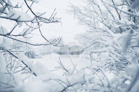Foto de Ramas de árboles, natural de fondo nevado - Imagen libre de derechos