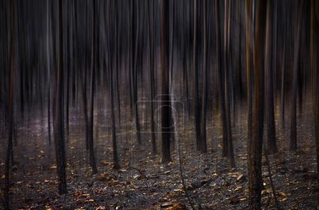 Burnt landscape of Portuguese forests