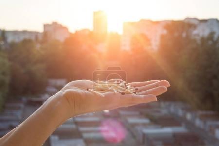 Foto de Muchos partidos con cabezas de partido de brown en fondo puesta de sol de la mano - Imagen libre de derechos