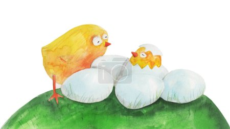 cute chicks and eggs