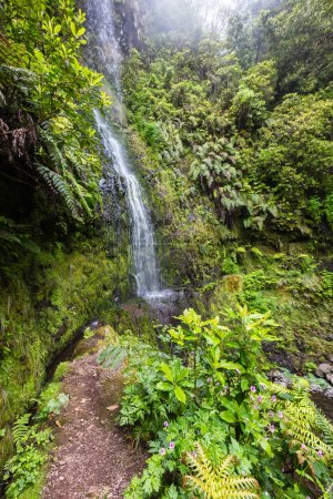 Madeira waterfall in Laurisilva forest