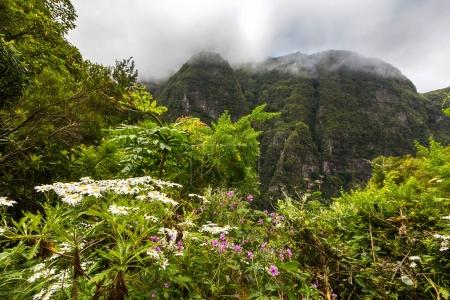 Beautiful flowers in Madeira forest