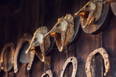 Foto de Cabeza de lucio seca en pared de madera - Imagen libre de derechos