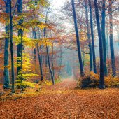 Pathway in foggy autumn forest