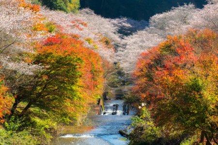 Autumn Landscape with sakura blossom in Nagoya