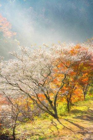 Landscape with sakura blossom