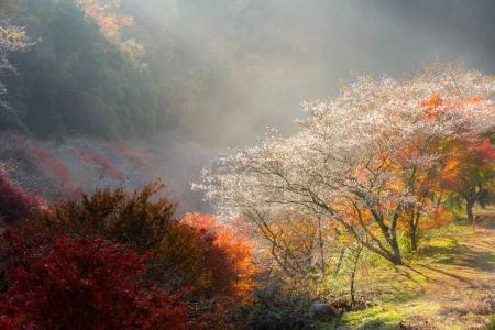 sakura blossom in Nagoya