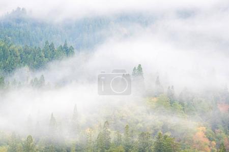 Misty background with pine forset in Autumn Mishima Fukushima, Japan