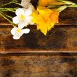 Yellow Canna and Plumeria flower on wooden backgro...