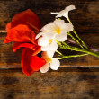 Red Canna and Plumeria flower on wooden background...