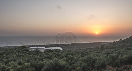 Olive trees, sea and sunset