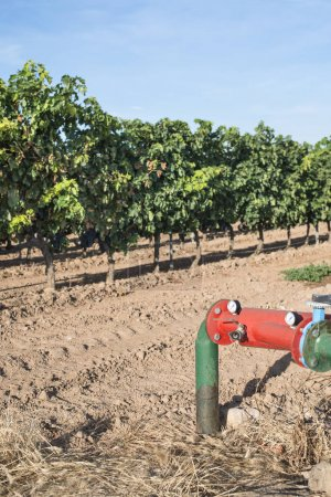 Agriculture faucet on vineyard