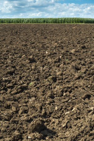 Foto de Suelo fluido y plantaciones con maíz en el fondo. Agricultura granja de maíz . - Imagen libre de derechos