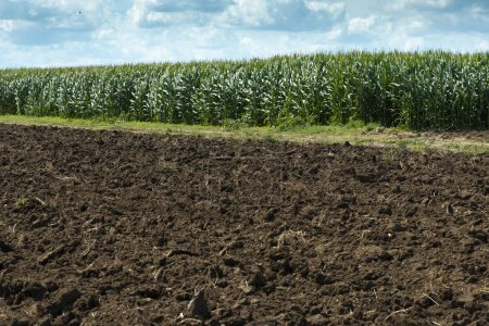 Photo for Plowed soil and plantations with corn in the background. Agriculture corn farm. - Royalty Free Image
