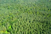 Aerial view of deep forest in Europe.