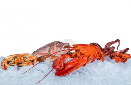 Fresh seafood isolated on white background