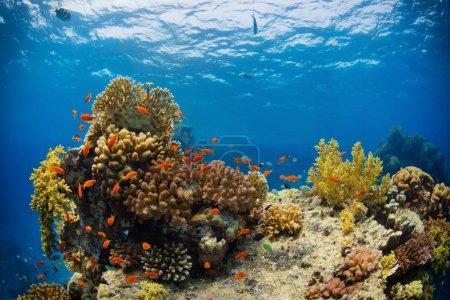 Photo pour Beau récif corallien avec sealife. Photo de paysage sous-marin avec poissons et vie marine - image libre de droit