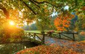 """Постер, картина, фотообои """"Красивый Осенний пейзаж в парке"""""""