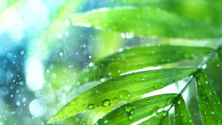 Dropping water on palm leaves