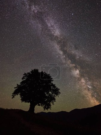 Silhouette of lonely high tree under incredibly beautiful starry night sky and Milky way in the mountains. Astrophotography