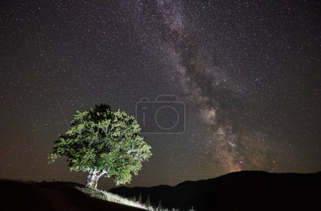 Illuminated lonely high tree under amazing starry night sky and Milky way in the mountains