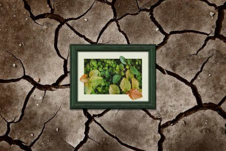 Photo for Ecology concept, Keep and save green leaf inside wooden photo frame seems like oasis in desert, surrounded with dry cracked earth - Royalty Free Image