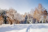 Path trail in winter bright white snow field on the background of birch trees forest Altai Mountains, Siberia, Russia