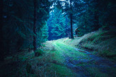 the evergreen forest