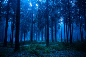 Night scene of autumn forest in Thuringia, Germany